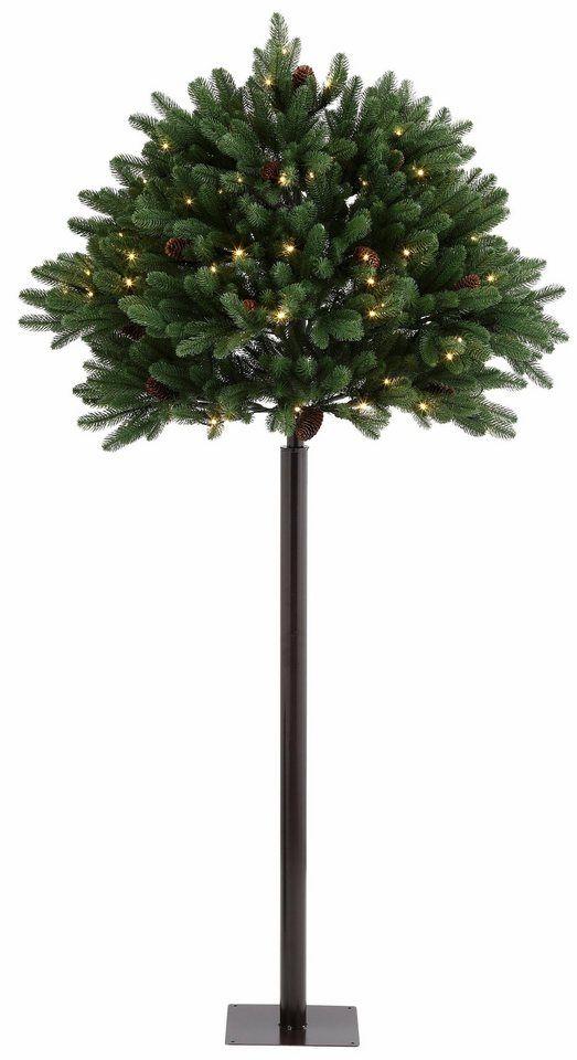 Kugel Für Tannenbaum.Premium Kugel Tannenbaum Für Den Außenbereich Für 179 99