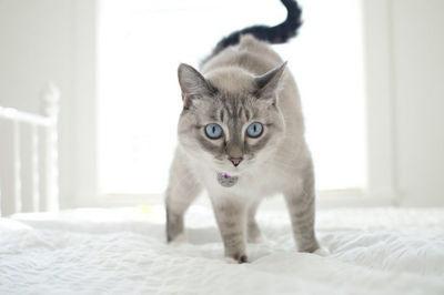 kitty: Beautiful Cat, Beds, White Winter, Sunny White, Bath, Blue Eye, Kitty, Cat Lovers, Animal