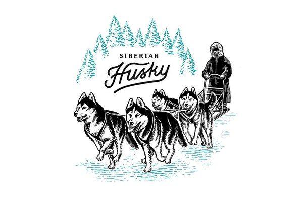 #husky #illustration #sleddog