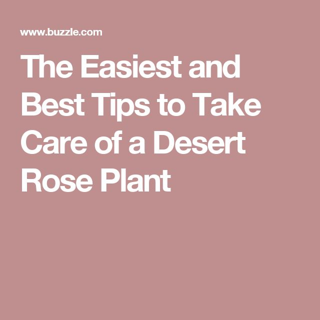 The Easiest and Best Tips to Take Care of a Desert Rose Plant
