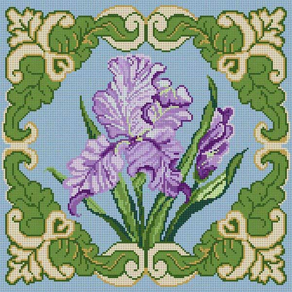 Iris w/ Border
