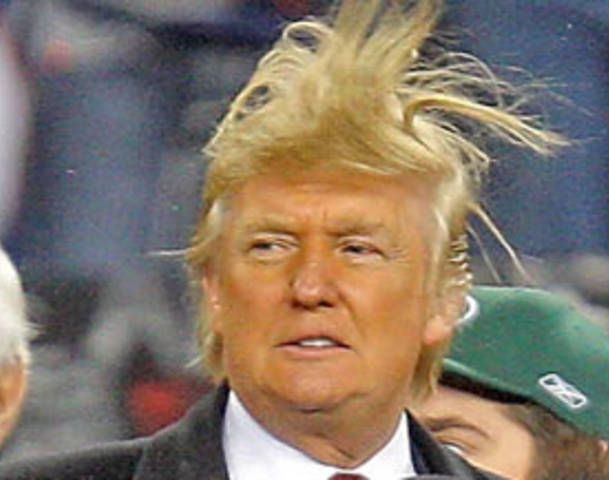 Expert Donald Trump   Orangutan Donald Trump   Pinterest   Donald ...