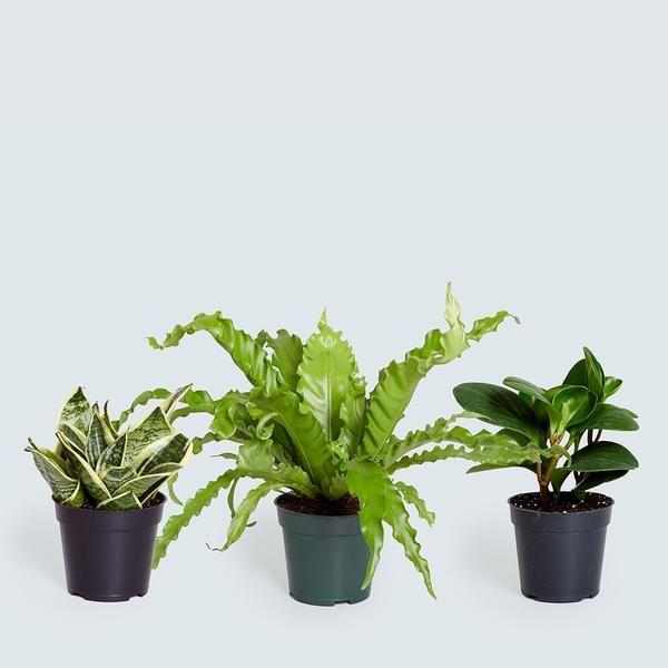 25 Best Ideas About Tropical Plants On Pinterest