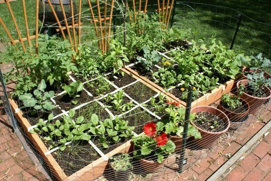 quare Foot Gardening: The idea behind square foot gardening is to plant a variety of plants in a small amount of space. You'll have to put a little bit of money into constructing the raised beds and filling them with soil, but once you put in the work, you can get consistent organic vegetables