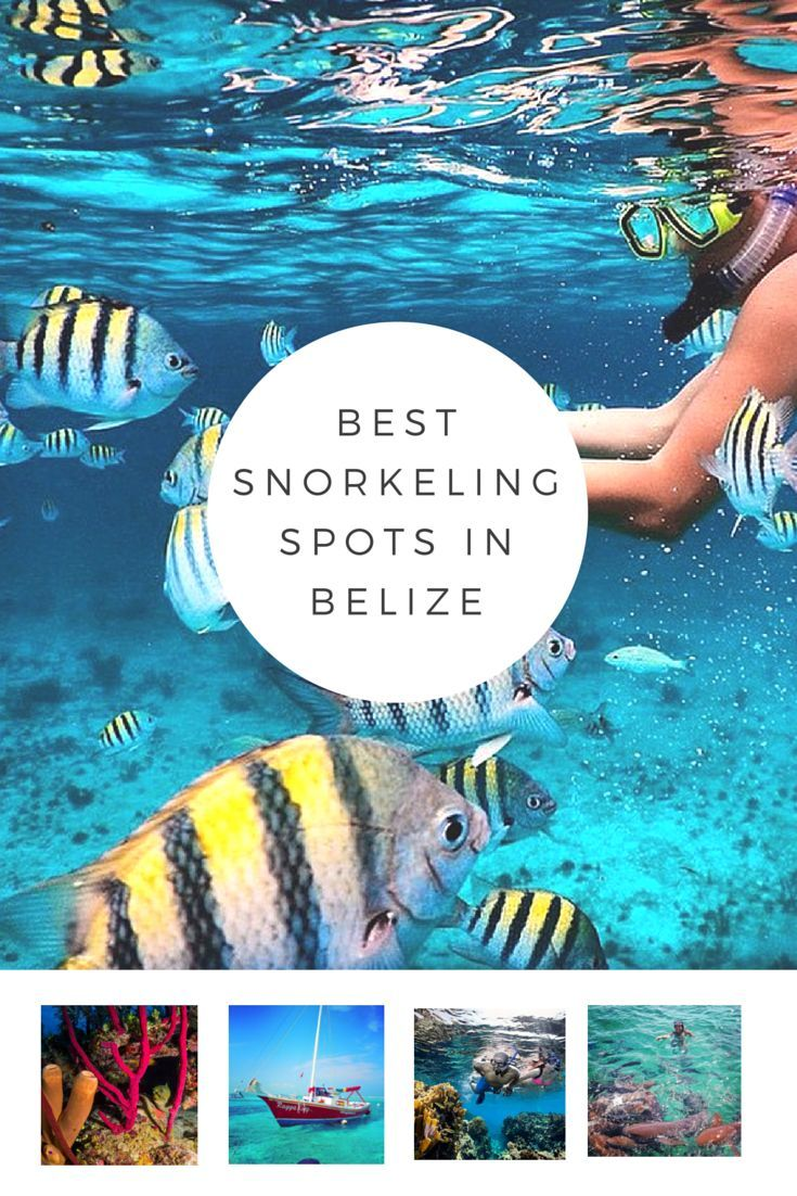 Our Favorite Snorkeling Spots in Belize! #travel #adventure #Caribbean