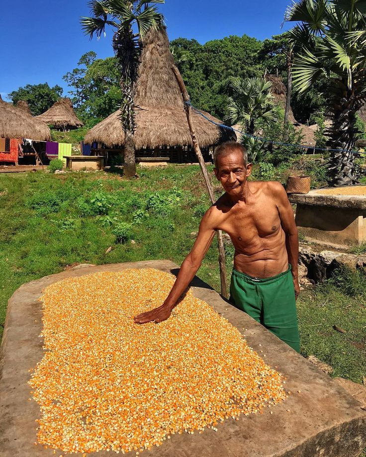 I took this shot yesterday during my trek through the small villages of #Sumba island #Indonesia.  This man is drying out corn grains on top of what looks like a table...   But actually it's a tomb with several dead people inside.  This is how they do it out here they bury people above ground directly in front of their homes (you can see more tombs in the background).    I find it fascinating to explore different cultures of the world and see how others live their lives. Anyone else agree?…