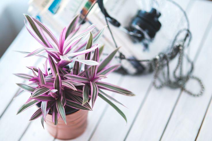 ¿Quieres dar ese toque primaveral a tu hogar y no sabes cómo? Sigue estos consejos para decorar tu casa y prepararla para la estación más viva.