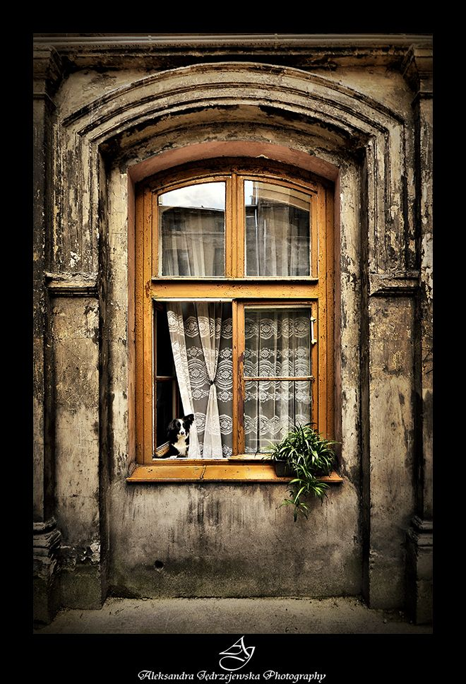 Look closely and you will see a beautiful little dog in the window. I love the weathered outside of the home and the lace curtain and the petite dog invite a passerby inside!