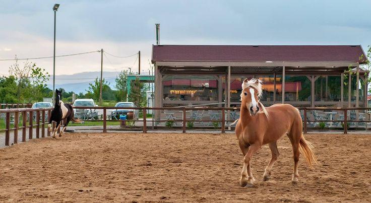 Filoneikos,Karditsa,Greece #horses