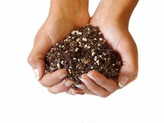 Bliss Gardens Premium Organic Succulent and Cactus Soil – 1 Gallon