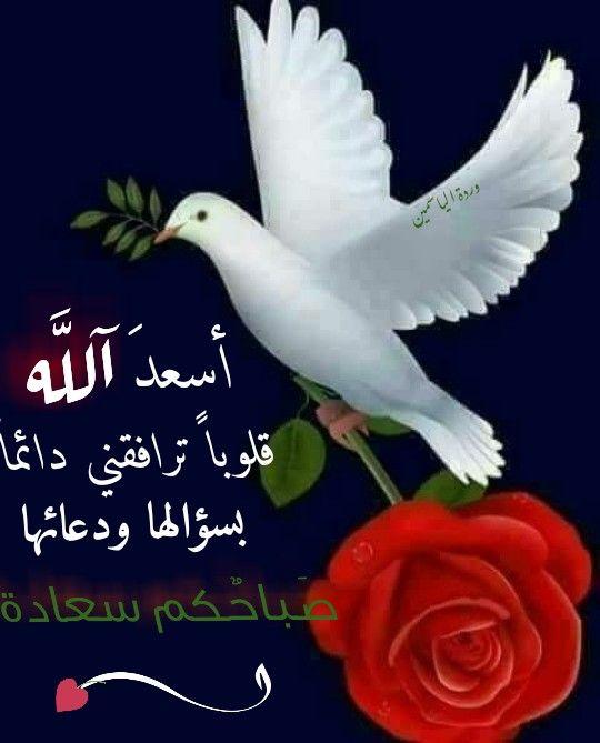 صباح الخير والسعادة Release Dove Prayers Islamic Quotes