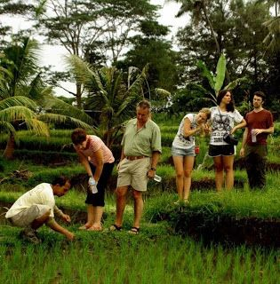 Find out how Balinese farmer planting the rice