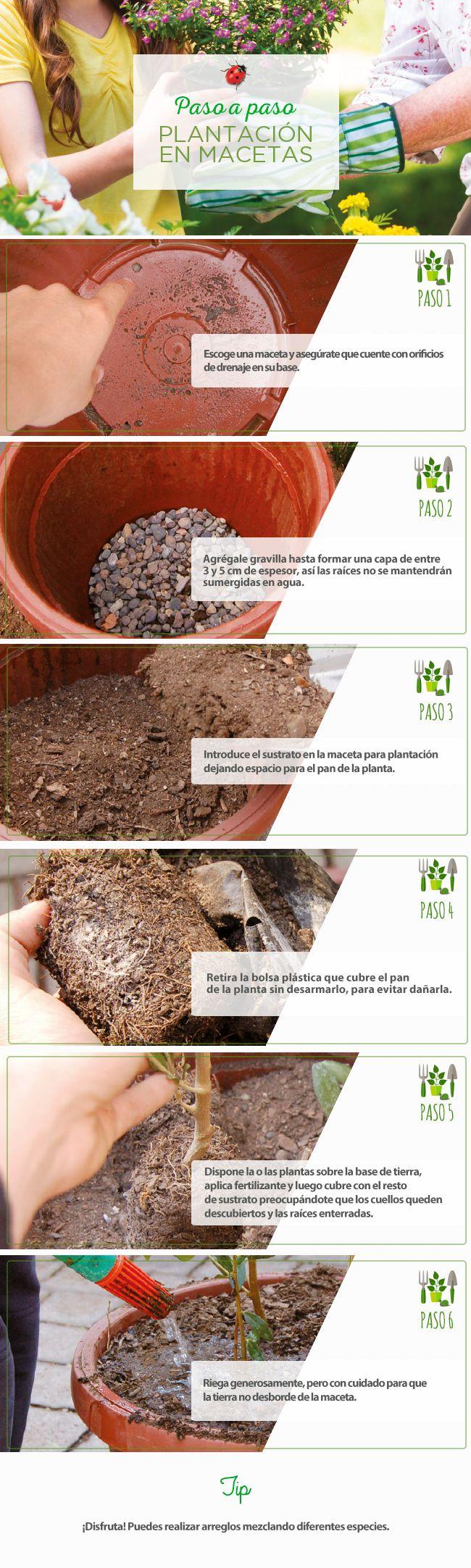 Plantación en macetas #Jardín #PasoAPaso #Flores