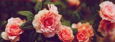 facebook-cover-photos-nature-flowers-with-quotes (12)
