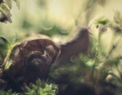 """Check out new work on my @Behance portfolio: """"snail stories ...."""" http://be.net/gallery/34409969/snail-stories-"""
