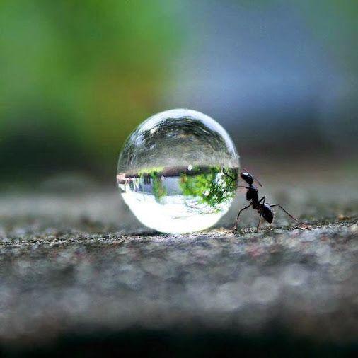 Ant Pushing Water