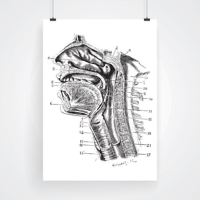 Flera olika anatomiska poster eller affischer, färdiga att hänga upp på väggen