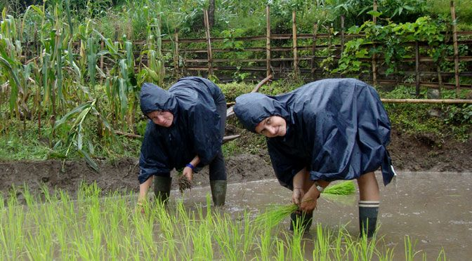 Volunteer summer Nepal - Summer volunteer programs abroad at organic farm June, July, August is an exciting experience get involve in rice plantation Nepal