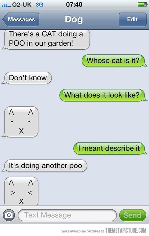 funny cat text message dog