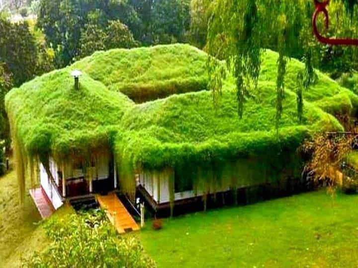Groen Dak Grass Covered House