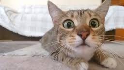 Картинки по запросу смешные фото кошек и собак