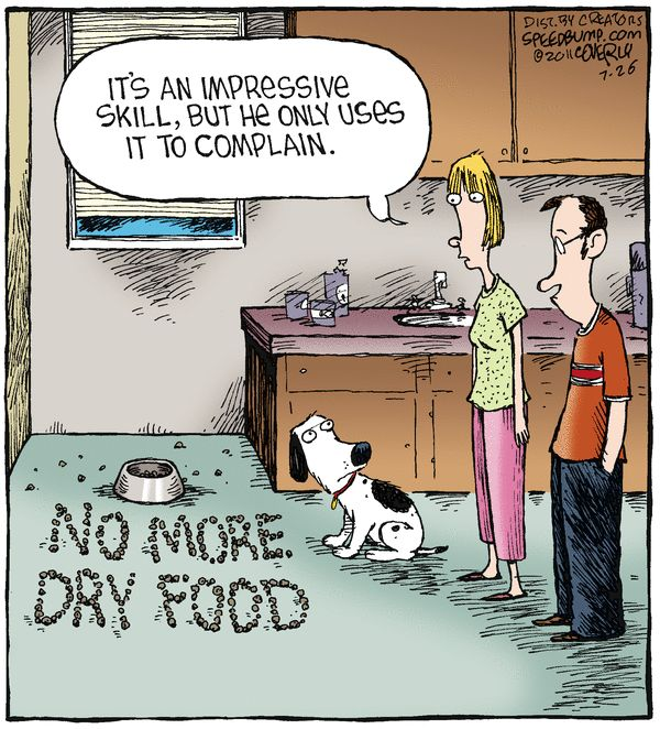 My Dog Hates Dry Dog Food What To Do