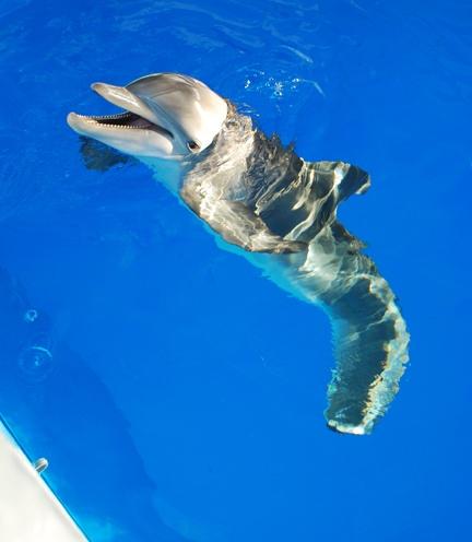 visit Winter at the Clearwater Marine Aquarium