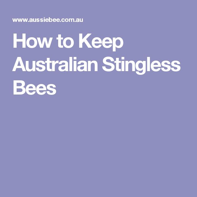 How to Keep Australian Stingless Bees