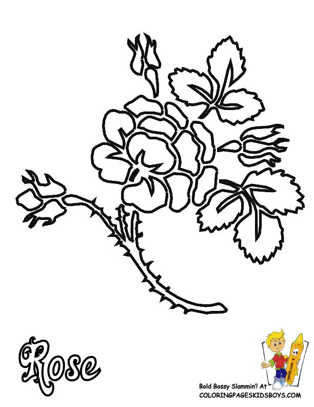 free coloring page of rose with thorn at yescoloring - Free Coling