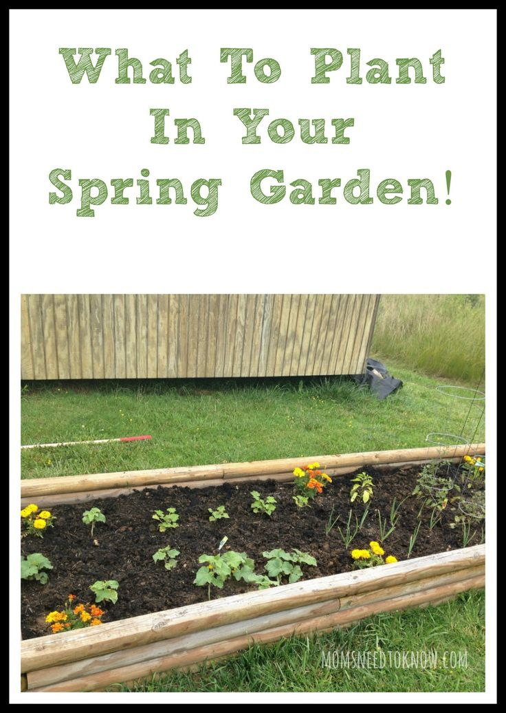 What To Plant In Your Spring Garden