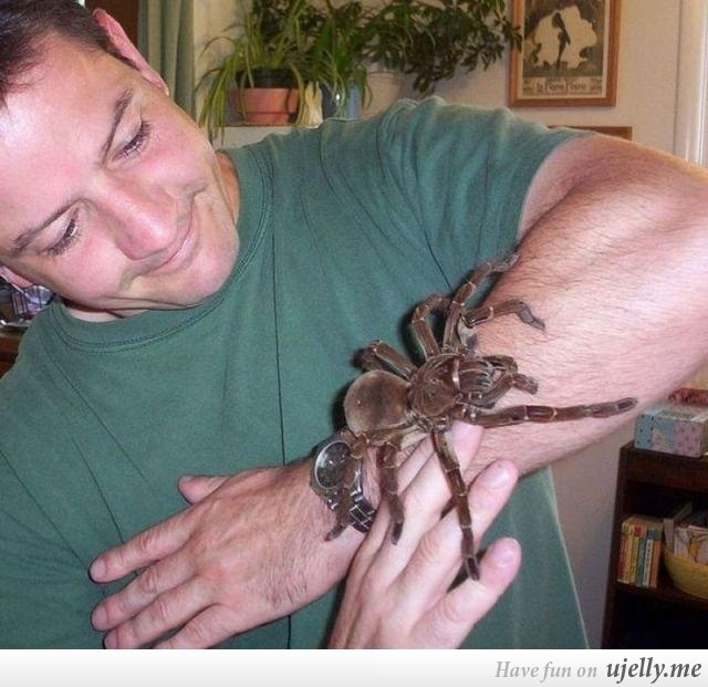 Meanwhile In Australia...I'm not afraid of spiders (but snakes...SCREAM!!)....but this big guy gives me the heebie jeebies.