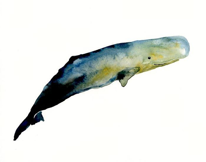 SPERM WHALE by DIMDI  Original watercolor painting 10X8inch. $25.00, via Etsy.