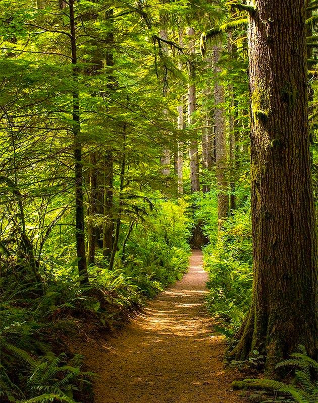 Woodland path at Silver Falls (Oregon) by Sherry Levasseur on 500px