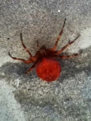 Spider squatter