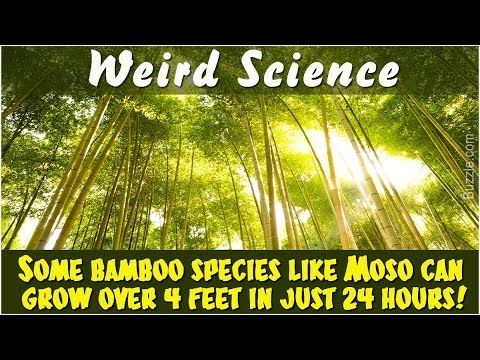 Here are some of the weird science facts that will be entertaining and informative at the same time.
