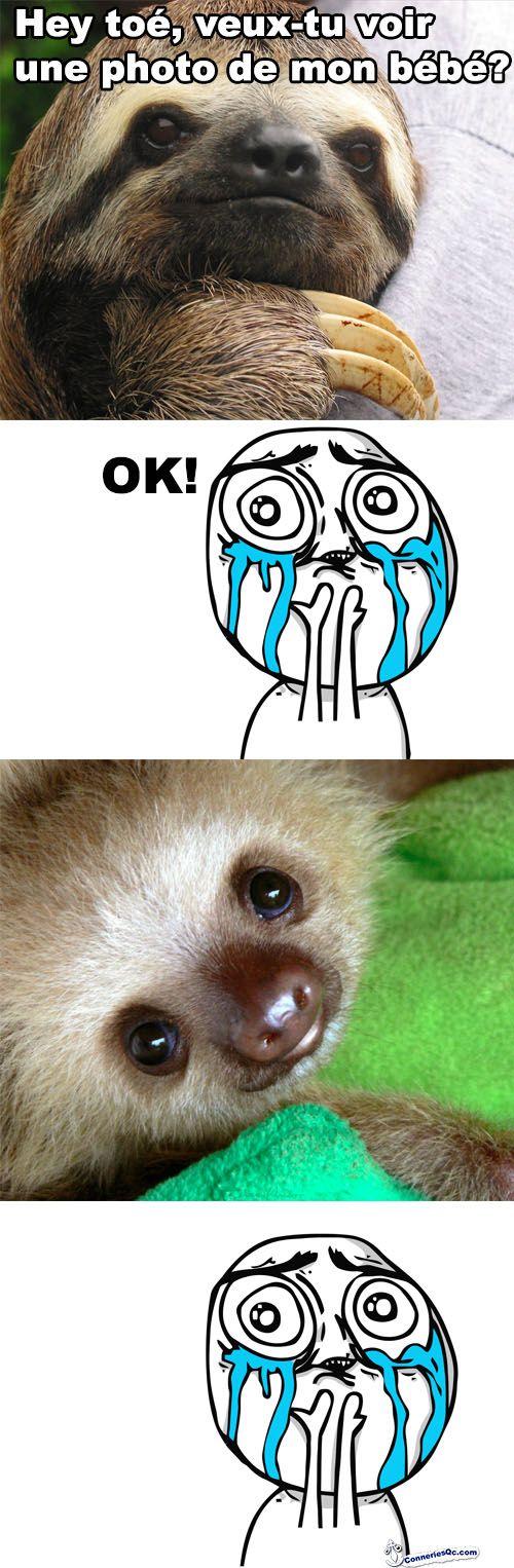 B 233 B 233 Paresseux Animaux Sloth
