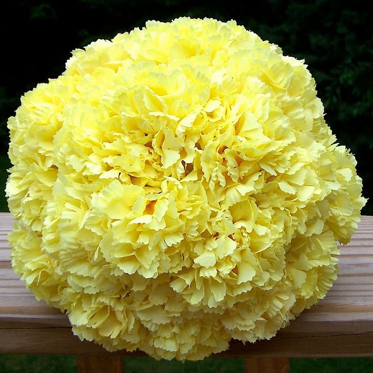 Carnation Bouquet. All yellow bouquet