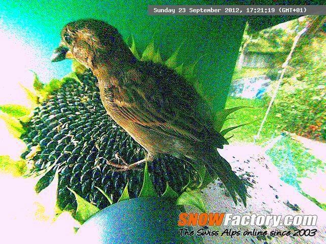 Last update:Sunday 23 September 2012, 17:21:19 (GMT+01)