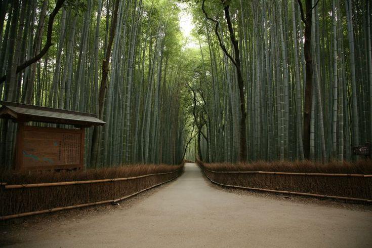 Kyoto, Bamboo Footpath    #Kimono #Japan