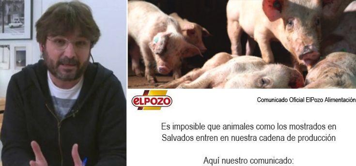 El Pozo lanza un comunicado después del polémico programa de Salvados sobre las granjas de cerdos: #salvados #jordievole #cerdos #cerdo #veganos #vegetarianos #noticia #noticias #animales #animal #pig #pigs #granjas #schnauzi