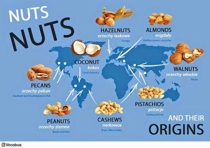 Angielskie słówka: nuts, rodzje orzechów http://www.vocabus.pl/
