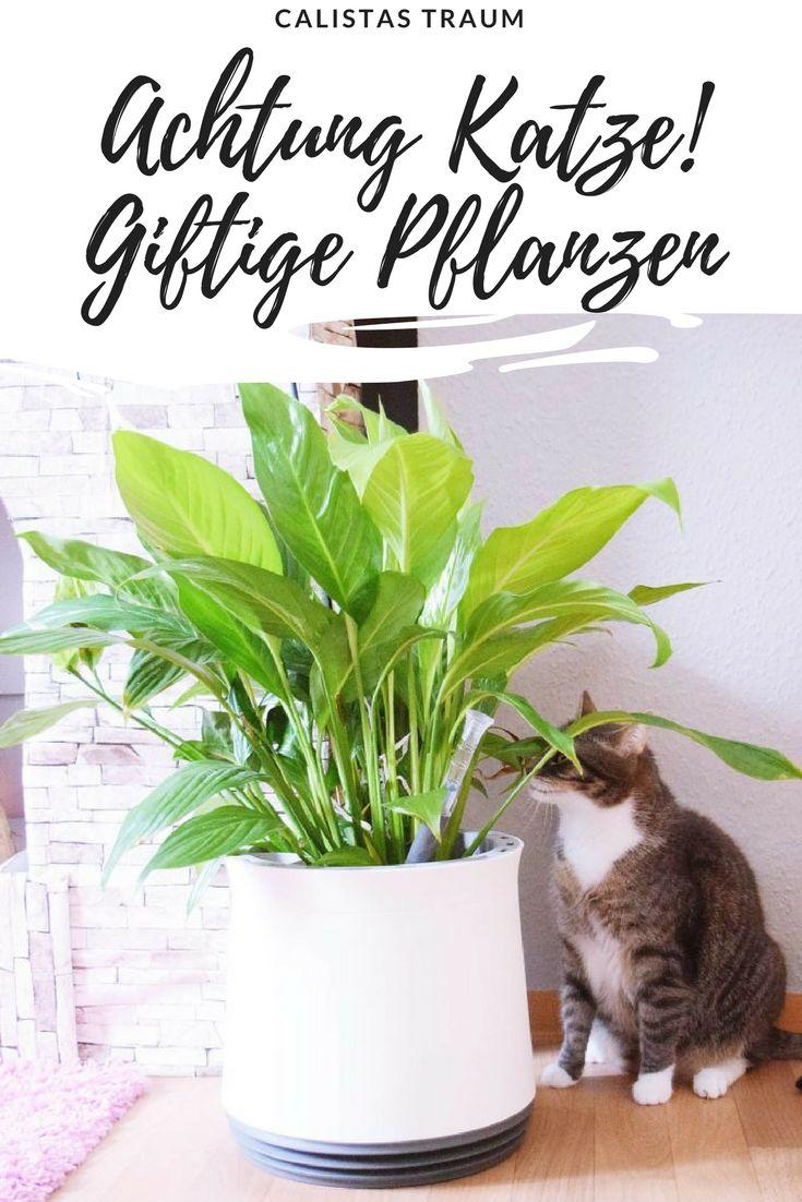 diese pflanzen schaden deiner katze pflanzen garten katze katzen cat tipps gesundheit. Black Bedroom Furniture Sets. Home Design Ideas