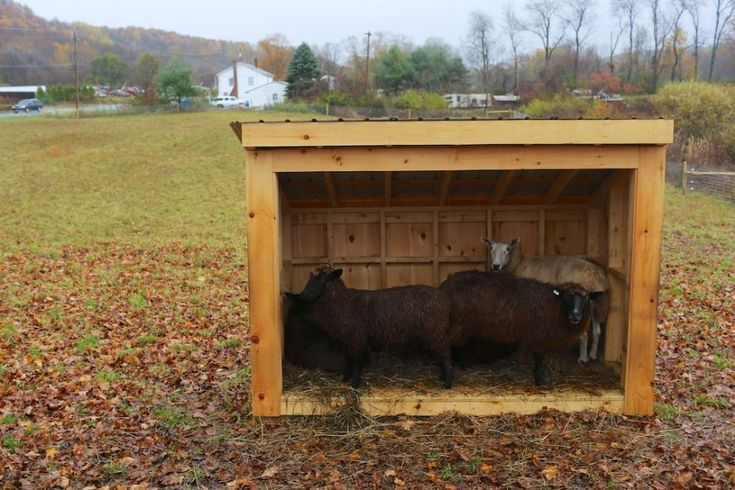 "sheep shelter  ""Out Of The Rain- Into The Skidbarn"" Jon Katz"