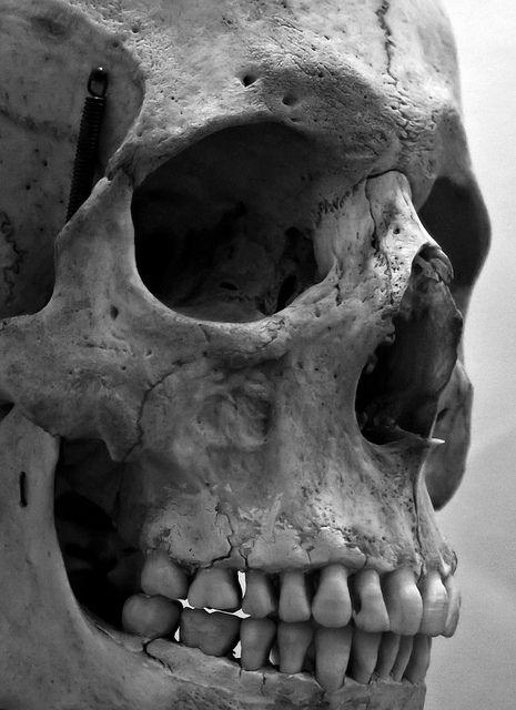 Skull by howzey, via Flickr