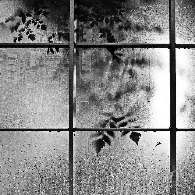 Rain by Mookio Chen