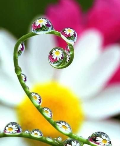 In each drop of freshness, the morning dew contains the whole universe - if we look deeply enough