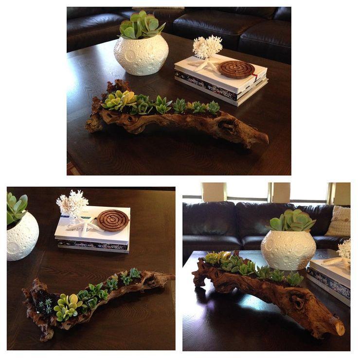 #maticas #succulents #cactus #plants #homedecor #wood
