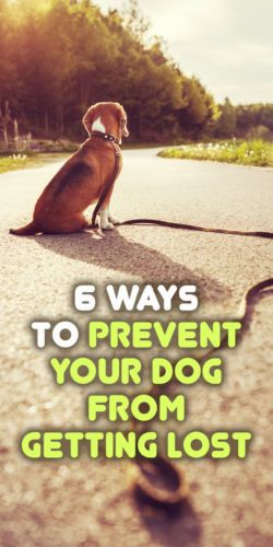 6 Ways to Prevent Your Dog From Getting Lost