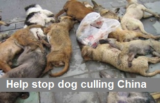Stop Dog Culling.Image Details, Best Friends, Animal Adoption No Abuse, Dogs Cull, News Portal, Dogs Beaten, Animal Abuse, Hate Dogs, Animalsadoptno Abuse