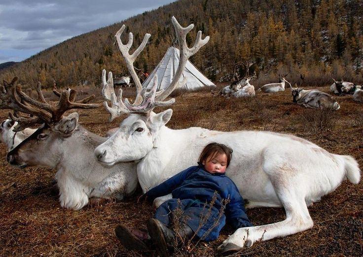 Baby sleeps on a stag Yakutia.Russia.